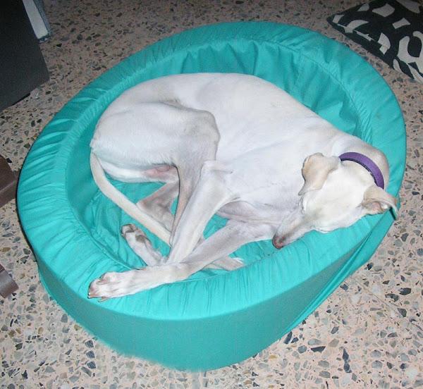 Cama perro aprender manualidades es - Como hacer una cama para perro ...