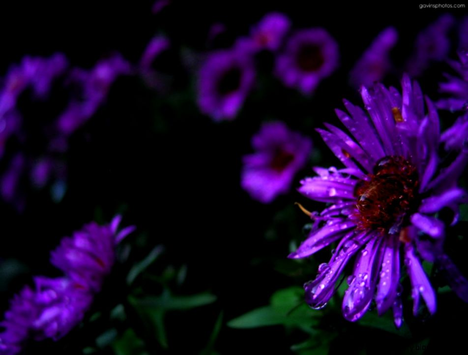 Purple Flower Wallpaper Background   WallpaperSafari