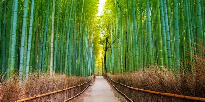 3.Terowongan bambu Hutan Sagano, Arashiyama, Kyoto