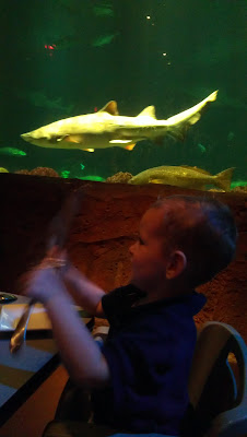 Dining with sharks