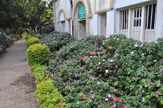 flora in nandi hills
