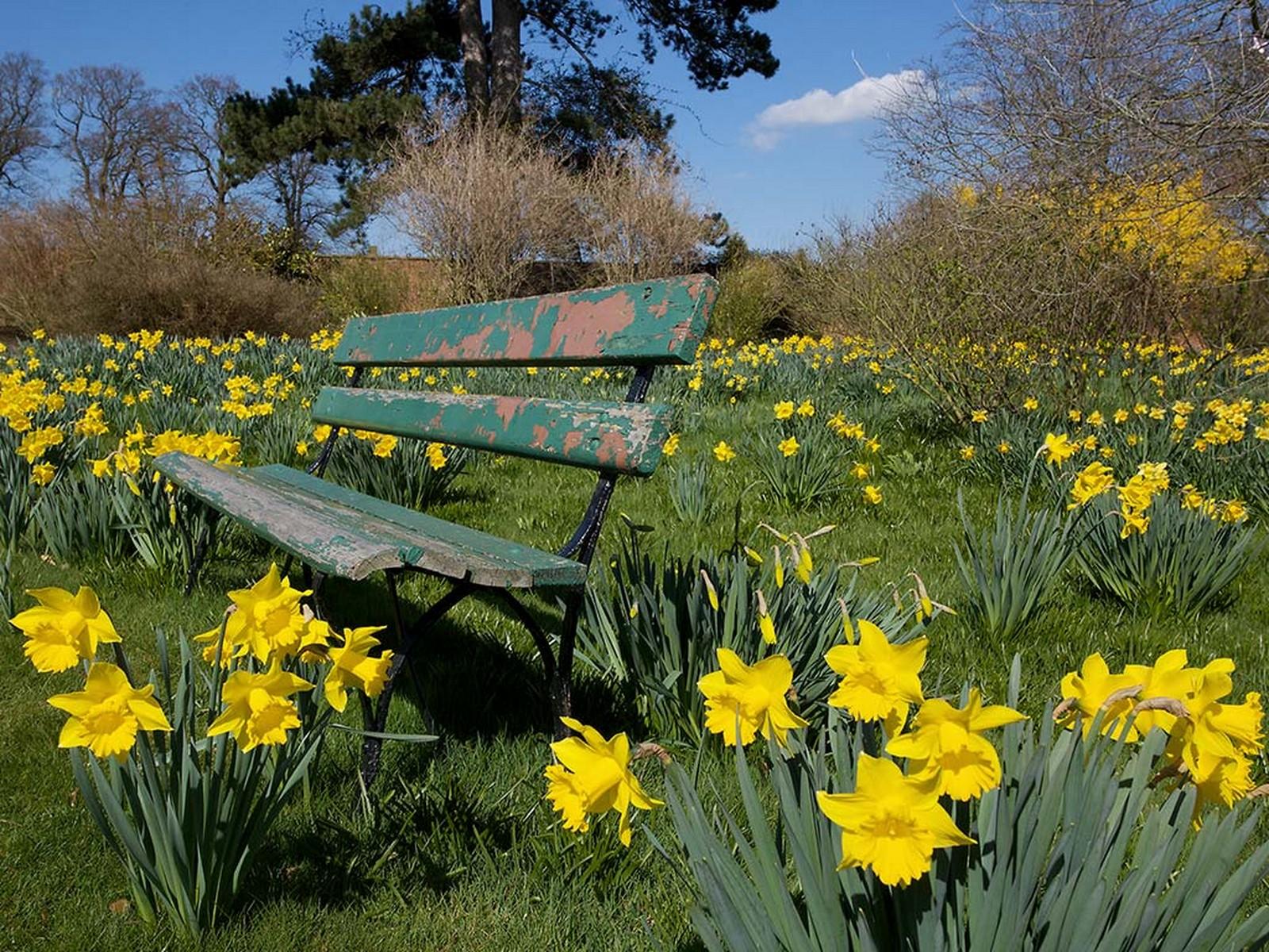 http://3.bp.blogspot.com/-5F764bgCNc8/T2MfDmaxZEI/AAAAAAAAAJw/VZEyLrIhMug/s1600/Tulips+Garden+Spring+Wallpaper.jpg