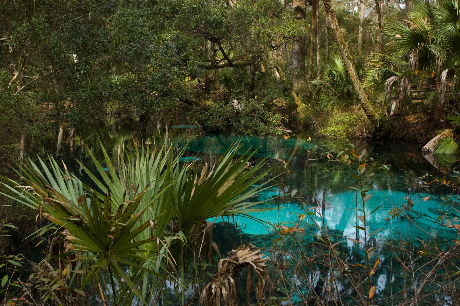 fern hammock springs  this spring is located in juniper springs in the ocala national forest  it is reached by a short boardwalk running besides the juniper     florida native photography  fern hammock springs  rh   floridanativephotography