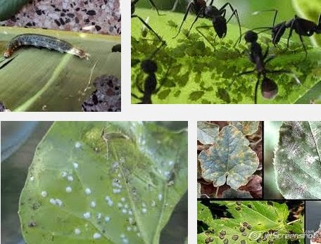 eliminar plagas del jardín