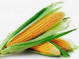 manfaat dari jagung