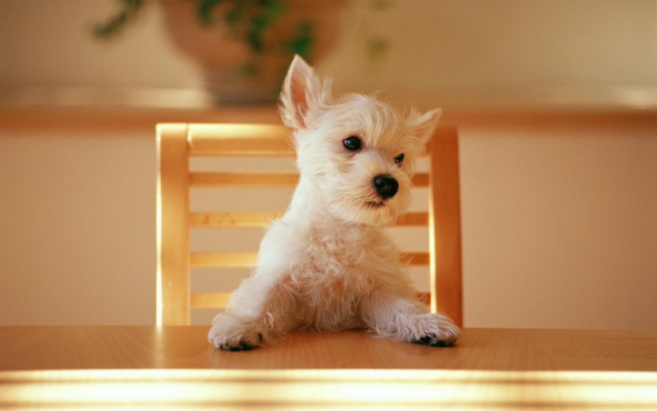 http://3.bp.blogspot.com/-5FcQ3aX-D1c/TnDEdk1mNqI/AAAAAAAAAIw/K7wnyPnxDns/s1600/dog-wallpaper-3-774767.jpg