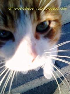 bani din poze cu pisici