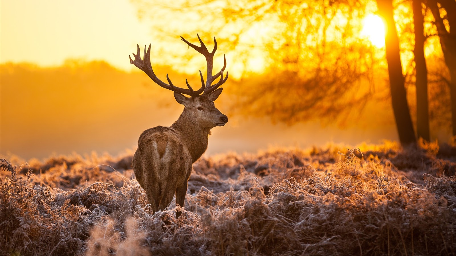 Deer Under The Sunset Full Desktop Wallpapers