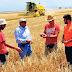 Αγωνία για τις τιμές σιταριού, καθηλωμένες για το κριθάρι