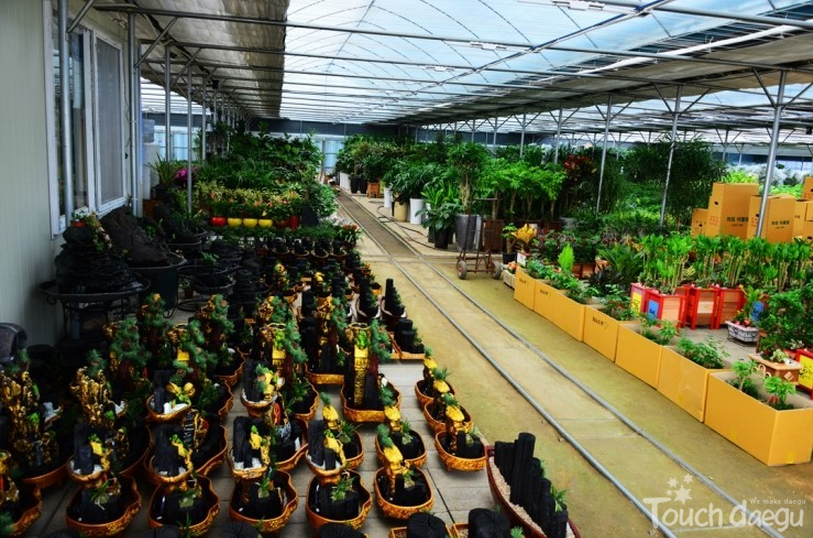 Many kinds of plants are arranged in a vinyl greenhouse