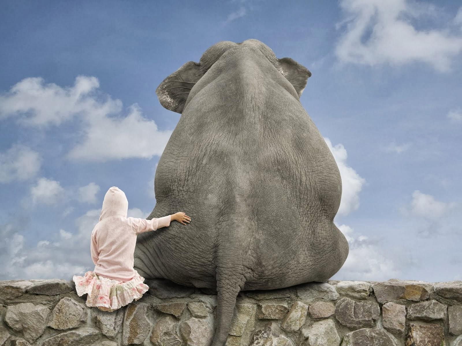 olifanten achtergronden bureaublad - photo #43