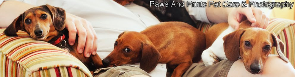 Paws and Prints Pet Care & Photography