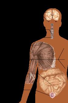 Scleroza multipla: cauze, simptome, tratament