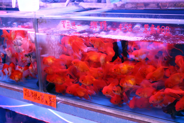 Goldfish Market in Hong Kong | travel blog