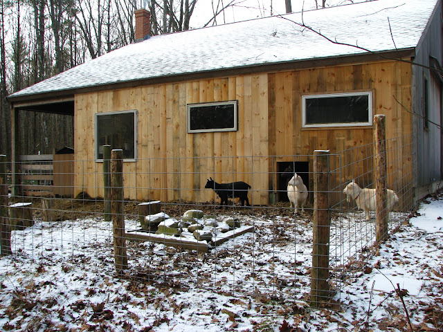 our small farm in the woods the goat barn. Black Bedroom Furniture Sets. Home Design Ideas
