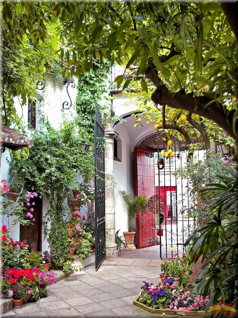Imagenes bonitas con flores y plantas 3 parte cerrado - Imagenes de patios andaluces ...