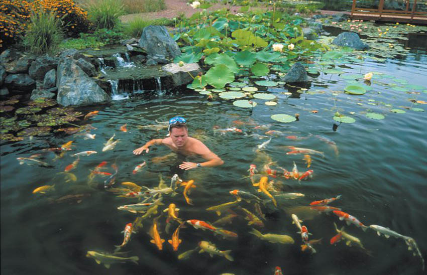 Aquascape your landscape ponds aren 39 t just for fish for How to make koi pond water clear