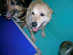 3/19/11 Urgent Small VA Shelter Needs YOUR HELP- Caroline County VA Dogs Are Urgent -