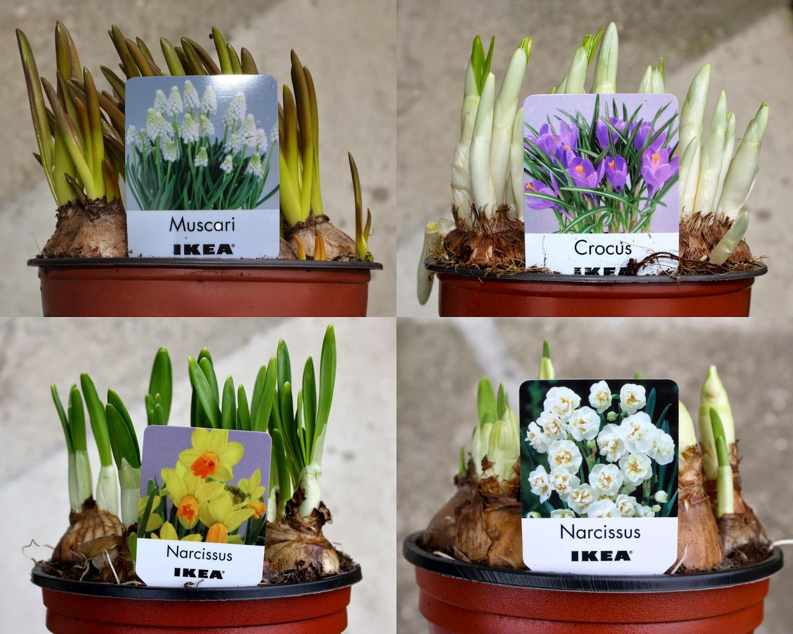 Il piccolo giardino di l bulbi tentatori for Vasi resina economici