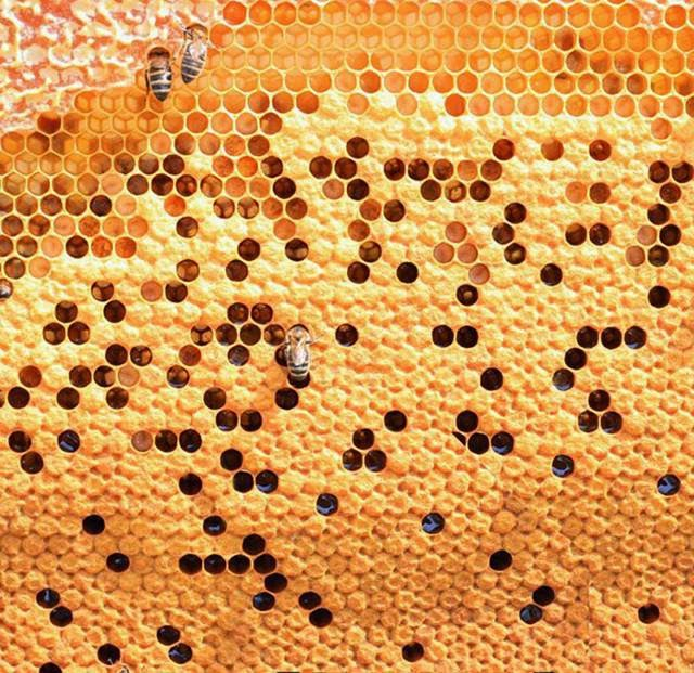 The whole life of honeybees revolves around their hive. They build their houses out of wax, making them honey and raise their young.