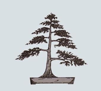 http://evoluzionebonsai.blogspot.it/2015/02/stili-bonsai-chokkan-eretto-formale.html