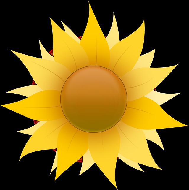 Must I Say Wow Like That Membuat Animasi Bunga Matahari Berputar Dengan Macromedia Director Adobe Director