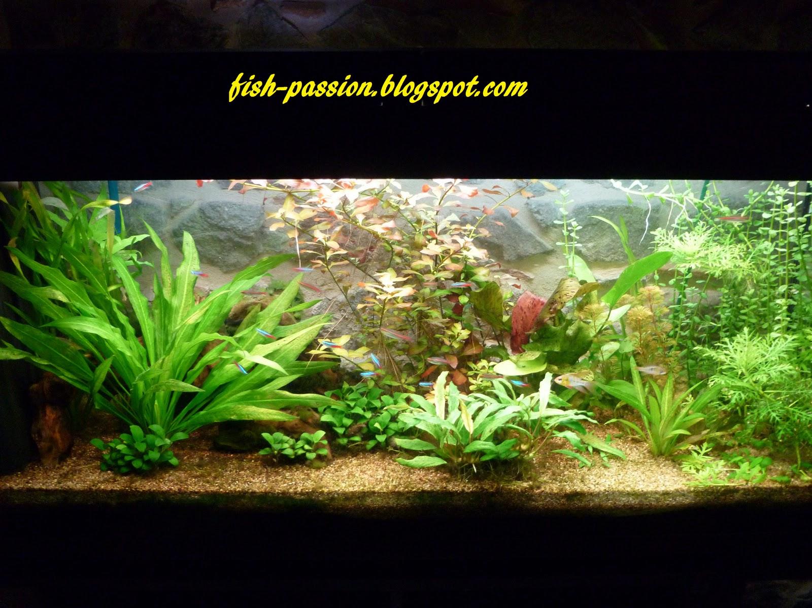 fish passion mon ancien bac plant. Black Bedroom Furniture Sets. Home Design Ideas