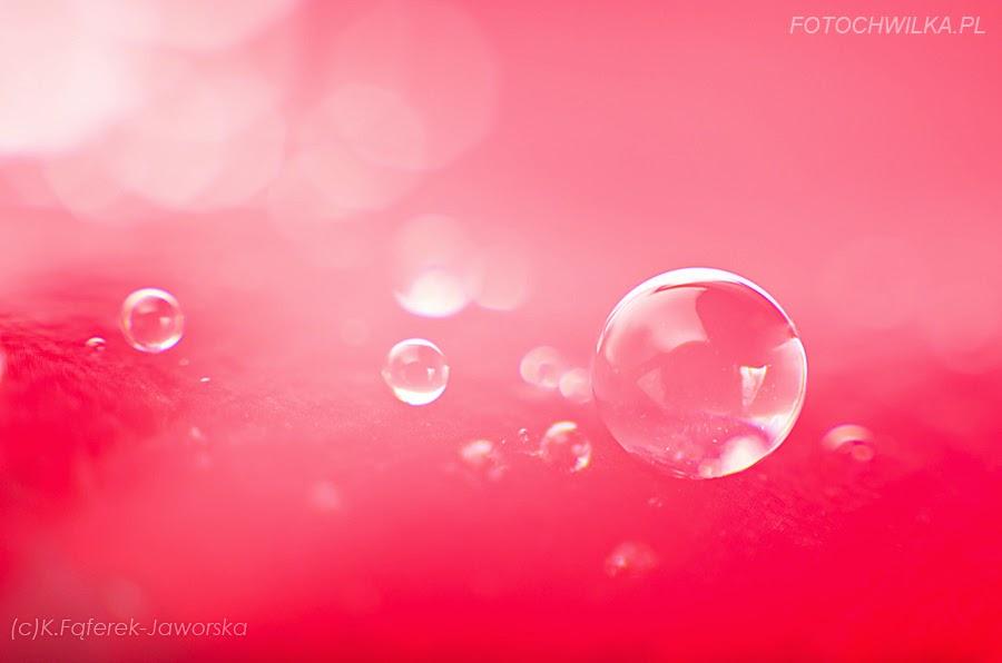 Zdjęcie makro wykonane z użyciem mieszka. Kropla wody na płatku róży.