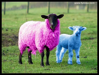 Funny Goat in pink & blue Pictures