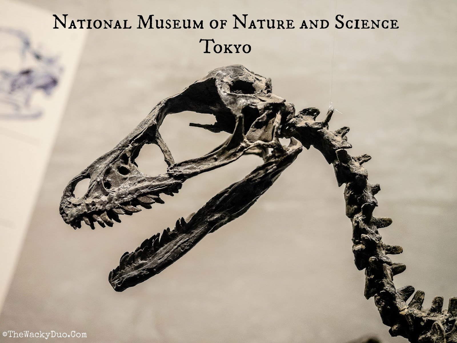 National Museum of Nature and Science Tokyo : Guide  The ...