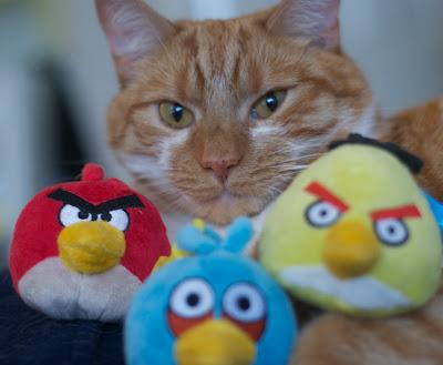 Gato amarelo posa com bichos de pelúcia do jogo Angry Birds