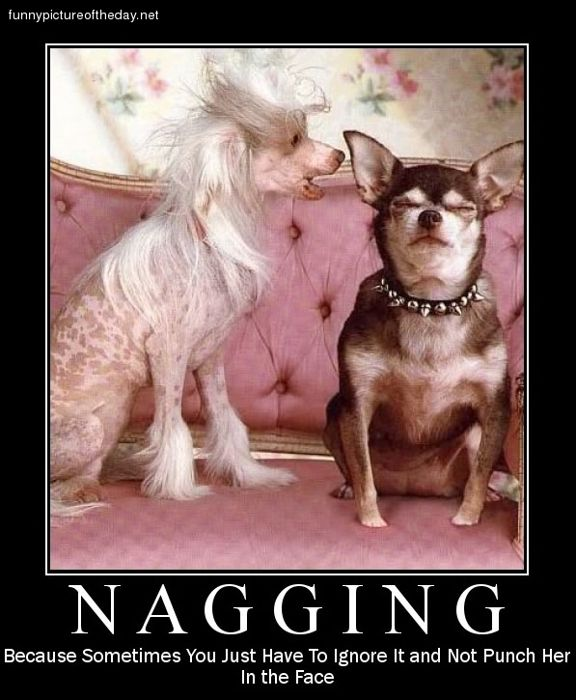 Nagging dog funny women