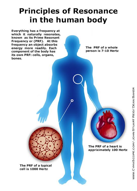 Principios de Resonancia en el Cuerpo Humano