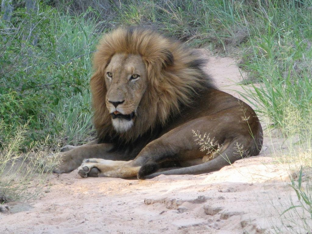 http://3.bp.blogspot.com/-5JIgg71fASE/T8WmvHWuyeI/AAAAAAAAC-Y/NW1NoCQPiRI/s1600/Big+Lion.jpg