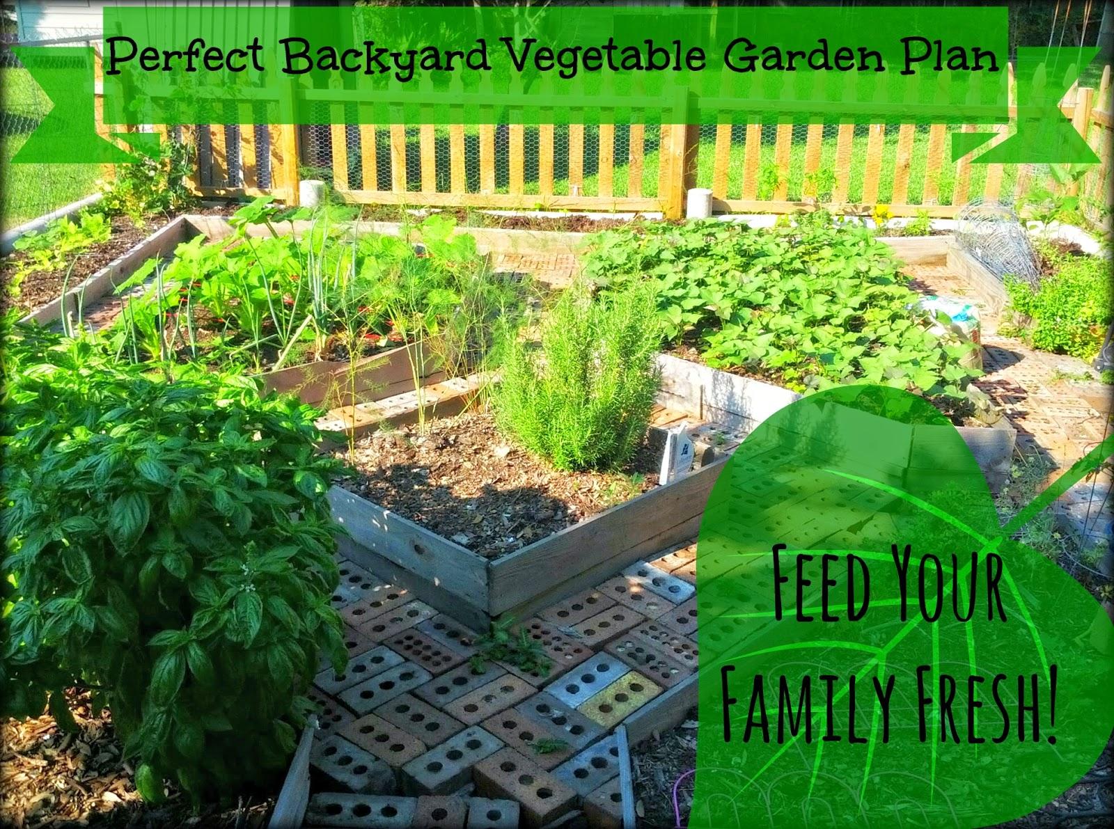 Family Backyard Garden :  Gardens Perfect Backyard Vegetable Garden Plan Feed Your Family