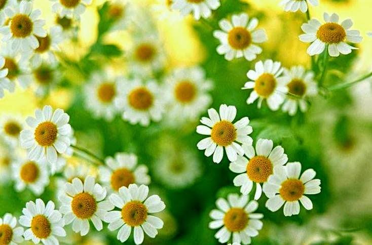 Indahnya Musim Bunga