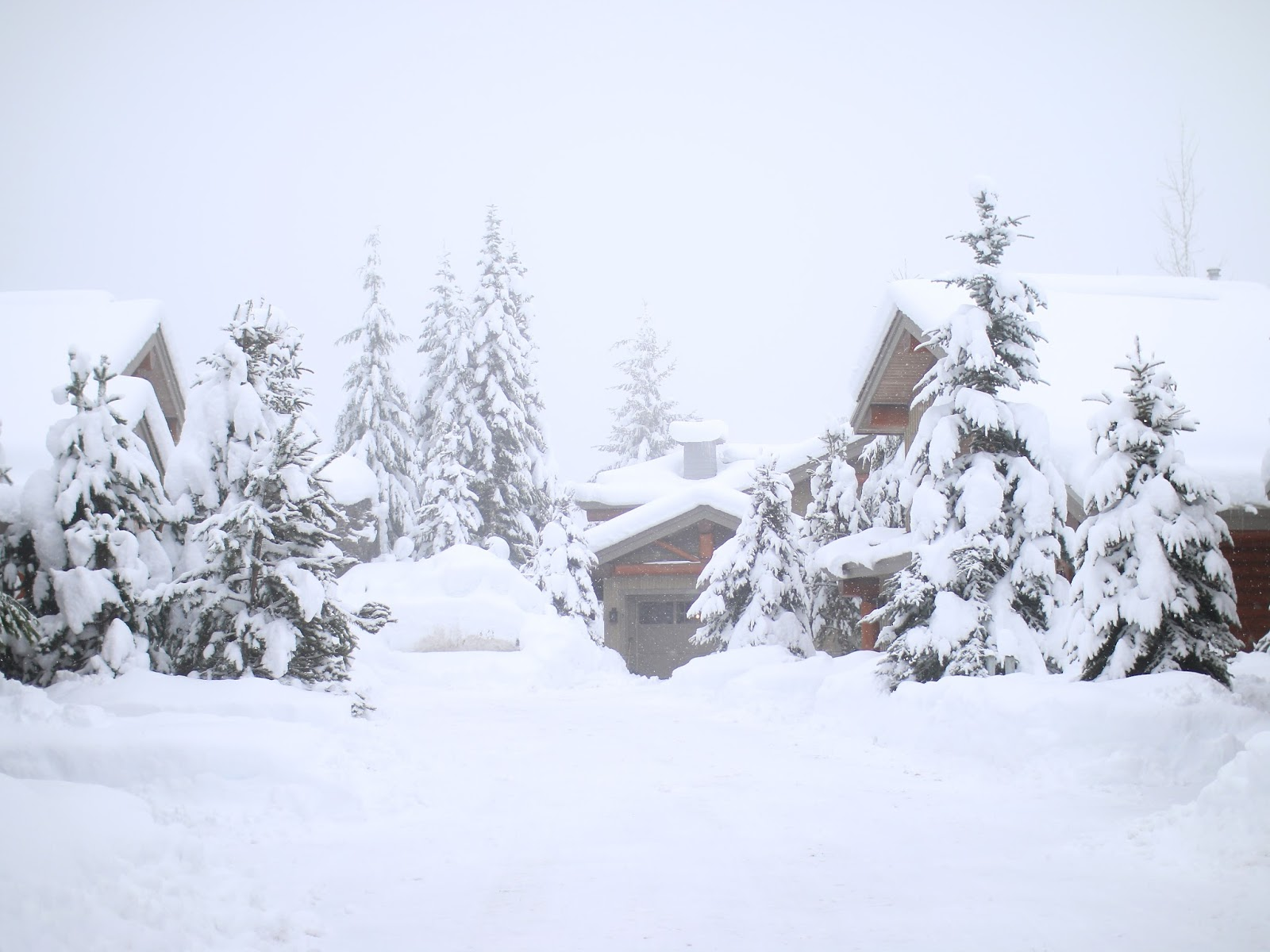 a picturesque winter scene photo from whistler canada