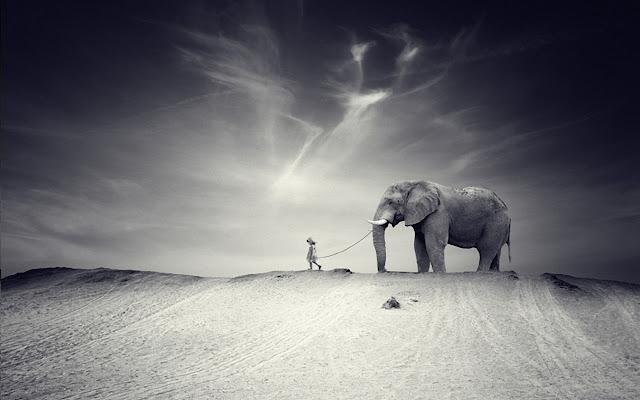 little girl, pet elephant, wallpapers, nature, desktop, HD, HQ, tapandaola111
