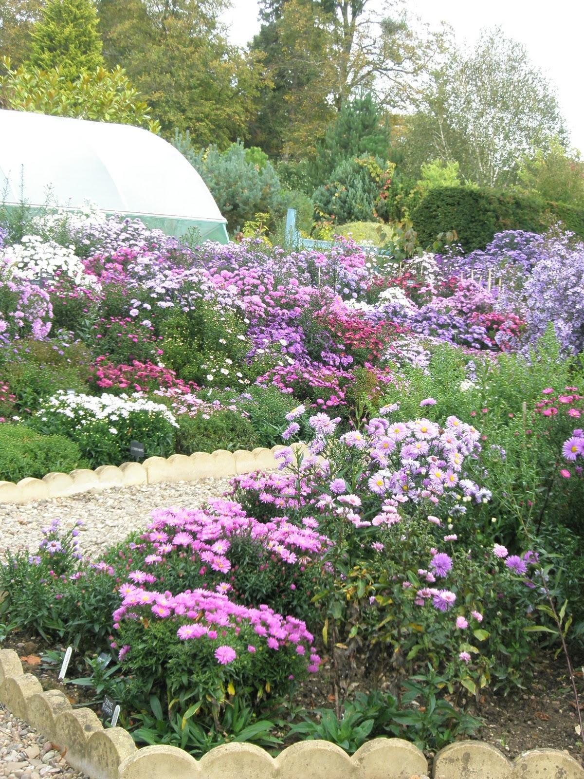 picton garden Hazel Twig: Picton Gardens