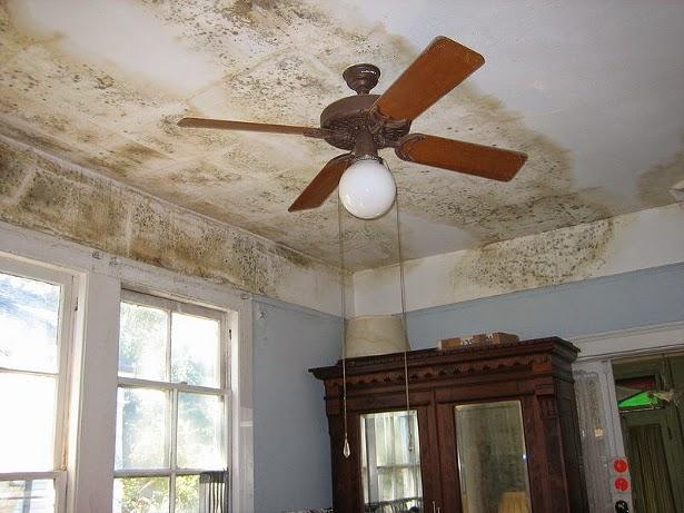 Perch si forma della muffa sulle pareti di casa studio tecnico e s a ing marco greco - Perche si forma la muffa in casa ...