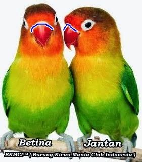 http://burungkicau-indonesia.blogspot.com/