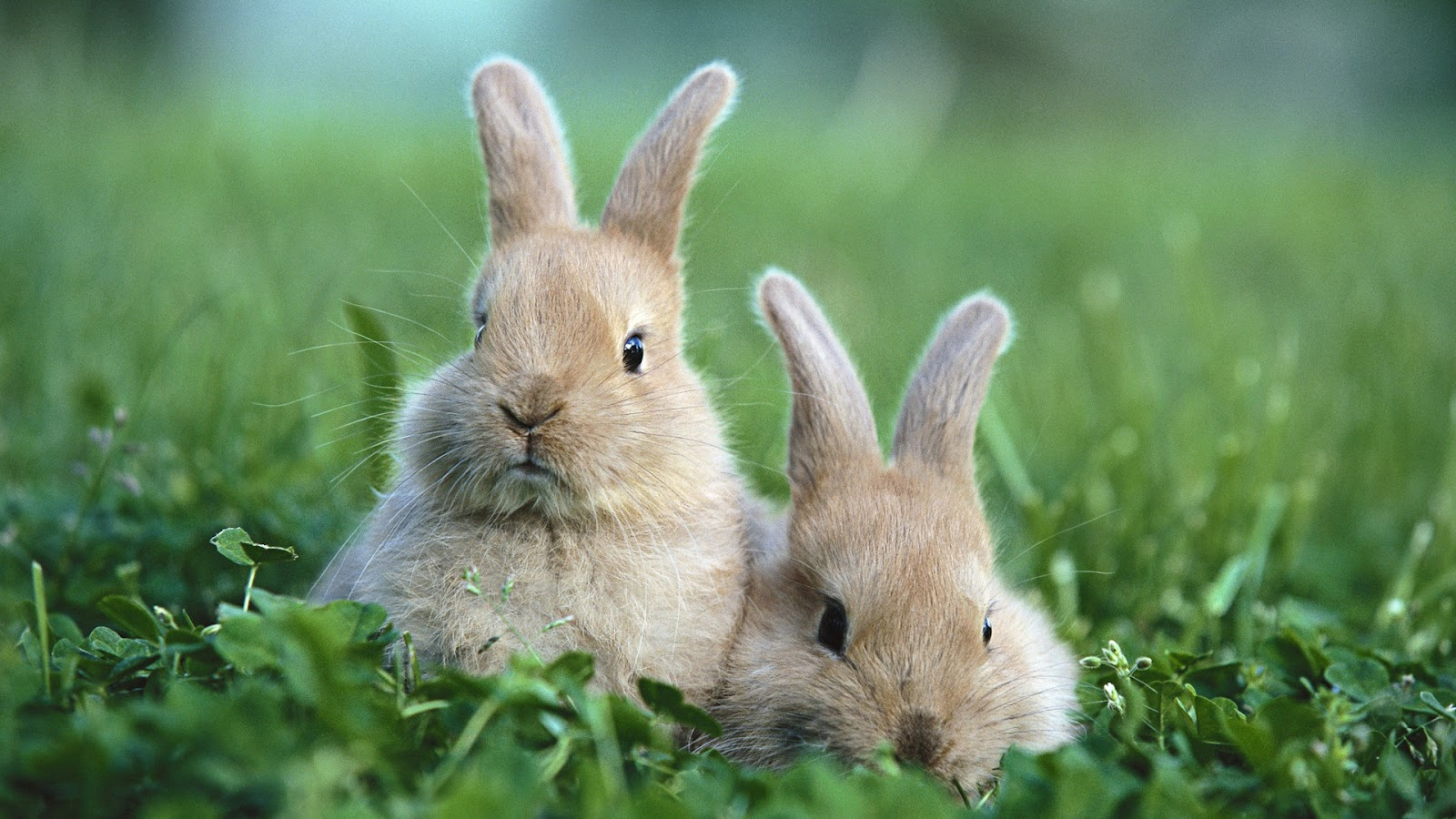 your wallpaper cute rabbit wallpaper
