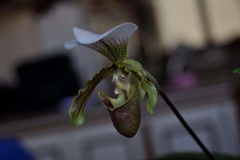 Orquídea Online