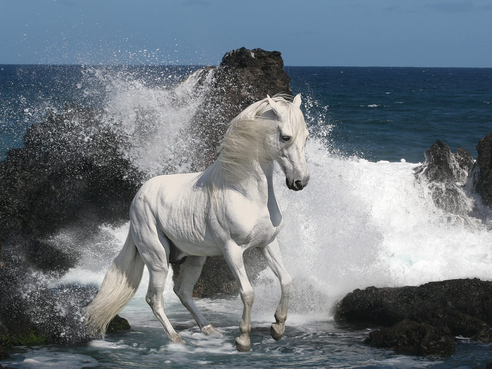 Best   Wallpaper Horse Mustang - Beautiful+Cute+White+Coloured+Horse+Pictures+_+Photos+_+Wallpapers+9  Pictures_1653.jpg