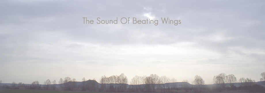 The sound of beating wings