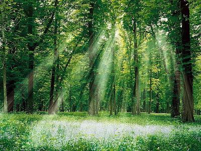 http://3.bp.blogspot.com/-5L2aiHJw1ns/TfC2EfAr85I/AAAAAAAAAAw/kx_8D4I9204/s0/Magical_Forest%255B1%255D%2B%25282%2529.jpg