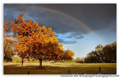 Beautiful rainbow over tree