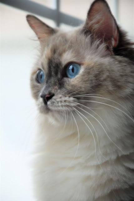 Cute Pussy Cat 31