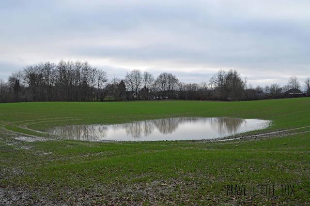 Überschwemmung Wiese
