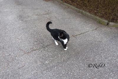 katt på väg. foto: Reb Dutius
